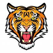 Tiger anger. Vector illustration of a tiger head. poster