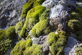 Closeup image of moss growing on a stone.