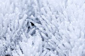Background image of long fragile ice crystals.