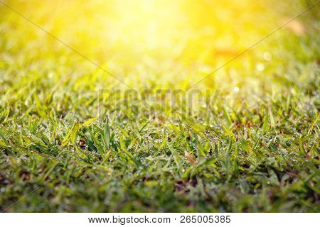 Dew On Grass With Blurred Green Background Under The Morning Sunlight.