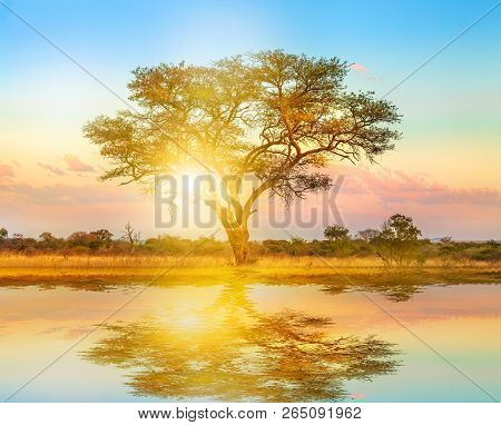 African Tree At Sunrise Reflected On A Pond. Serengeti Wildlife Area In Tanzania, East Africa. Afric