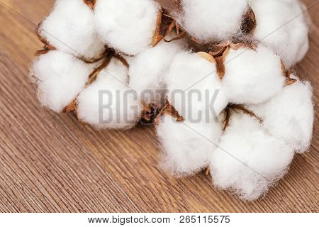 Spa Concept. Fluffy Cotton Flowers On Natural Rustic Wooden Background. Natural Fon With Copy Space.