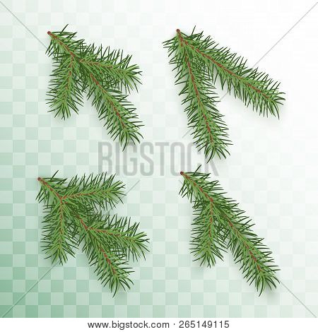 Conifer Branches Set. Green Branches Of A Christmas Tree Isolated On Transparent Background. Conifer