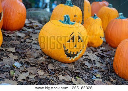 Carved Halloween Pumpkin Sitting In Pumpkin Patch