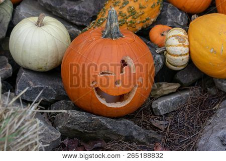 Carved Winking Pumpkin Sitting On Rocks  Outside