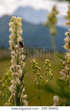 Mountain Scene In The Italian Dolomites