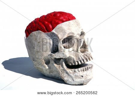 Human Skull with a Brain. Human Brain. Human Skull. Isolated on white. Room for text.