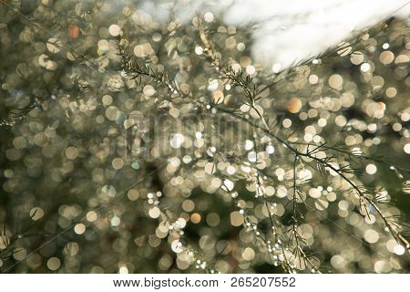 Frail And Thin Branch On The Background Of Light Bokeh