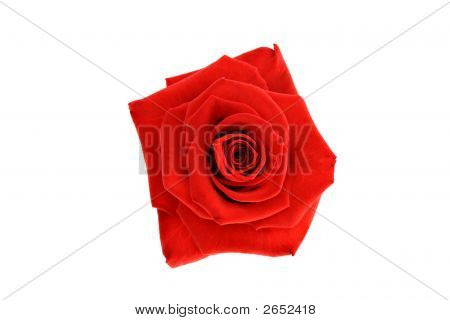 Red Rose Head Isolated On White Background