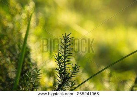 Nature Environment Background. Green Plant Background. Desktop Image Background. Nature Green Plant.