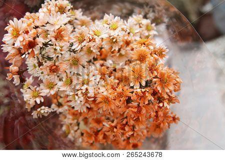Close Up Of Tiny Orange Flowers. Bouquet Of Tiny Orange Flower.