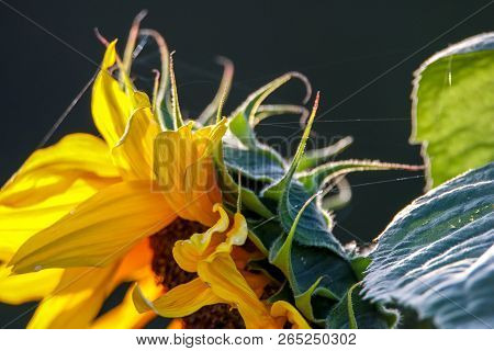 Color Flowers. Blooming Flowers. Flowers On A Green Grass.  Meadow With Flowers. Wild Flowers. Natur
