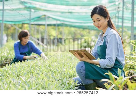 Young Female Farmer Sitting Near The Green Plants And Using Touchpad With Her Colleague Working In T