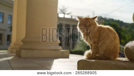 Red Cat On The Background Of Architecture. Red Cat In Greece. Cat With A Sore Eye. Santorini Stray G