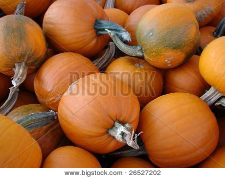 Autumn Harvest Pumpkins