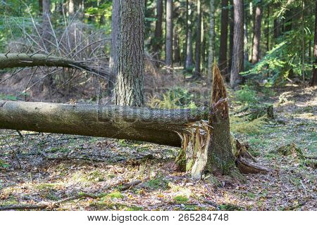 Storm Damage In The Forest In Germany