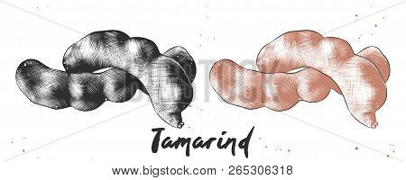 Vector Engraved Style Illustration For Posters, Decoration And P