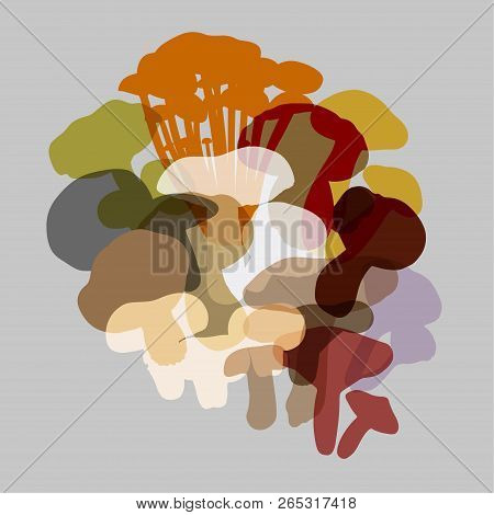 Composition Of Various Mushrooms On A Light Gray Background