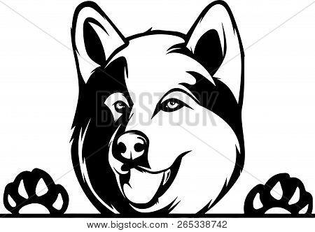 Animal Dog Alaskan Malamute Rg6H Peeking.eps