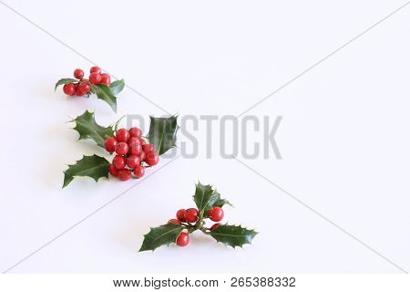 Christmas Holly With Red Berries. Traditional Festive Decoration. Holly Branch With Red Berries On W