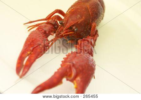Craw-fish