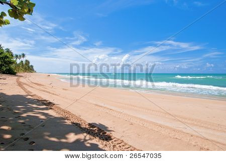 Tracks, Tropical Beach