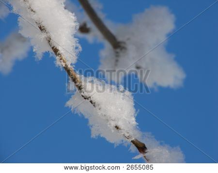 Frosty Branch Closeup