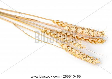 Spikelet Of Wheat Isolated On The White. Closeup Photo