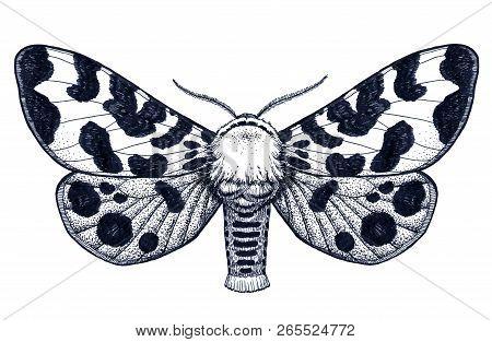Hand Drawn Butterfly Tattoo. Dotwork Tattoo. Spotty Butterfly. Arctia Caja Americana. Mystical Symbo