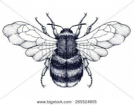 Honeybee Tattoo. Dotwork Tattoo. Mystical Symbol Of Diligence, Economy, Purity, Immortality, Fertili