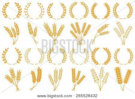 Wheat Or Barley Ears. Harvest Wheat Grain, Growth Rice Stalk And Bread Grains Isolated Vector Set