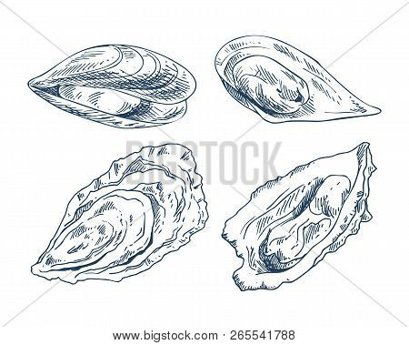 Vector Hand Drawn Monochrome Seafood Edible Shellfish Mussel And Oyster Illustration. Cockleshell Ic