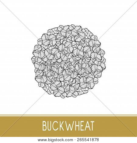 Buckwheat. Seed, Grain, Fruit. Sketch. Monochrome. On A White Background.