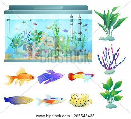 Aquarium In Glass Container Fish And Plants. Biodiversity In Box. Decorational Seaweed Types Of Liml