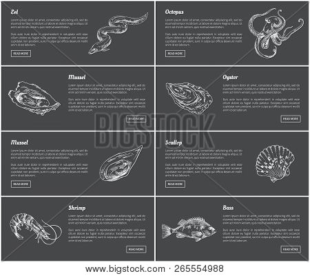 Eel And Octopus Marine Dwellers Set. Species With Shells Sea And Ocean Animals. Posters Presenting S