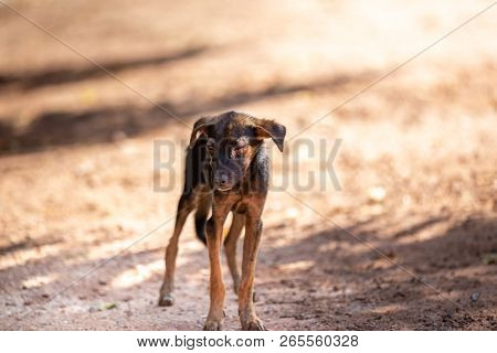 Homeless Dog,stray Dog,vagrant Dog In Thailand,stray Dog Look Forward With Sad Eyes