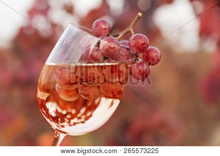 Wine Glass With Wine And A Bunch Of Grapes Inside, Against The Background Of Red Vineyards