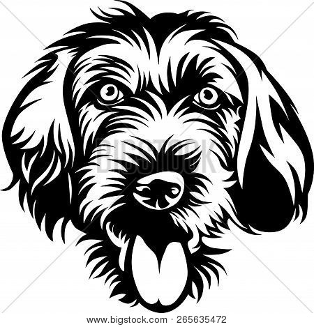 German Wirehaired Pointer Images Illustrations Vectors Free
