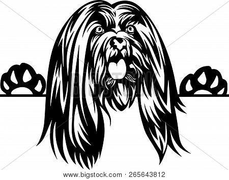 Animal Dog Lhasa Apso 5T6Y Peeking.eps