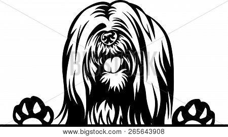 Animal Dog Lhasa Apso 5T6Yfv Peeking.eps