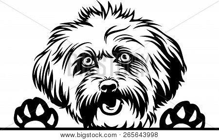 Animal Dog Lhasa Apso 6T4R Peeking.eps