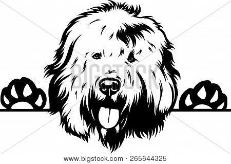 Animal Dog Old English Sheepdog 5T6Y Peeking.eps