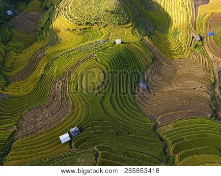Vietnam Landscapes. Rice Fields On Terraced Of Mu Cang Chai, Yenbai, Vietnam. Royalty High-quality F