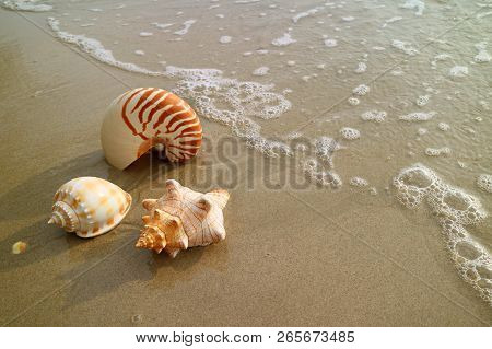 Beautiful Natural Sea Shells On The Wet Sand Beach With Backwash, Thailand