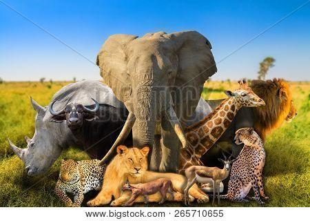 Big Five And Wild African Animals On Savannah Nature Background. Serengeti Wildlife Area In Tanzania