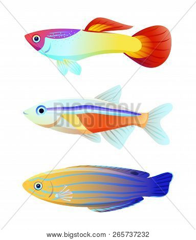 Aquarium Fish Silhouette Isolated On White Icons. Freshwater Animals Guppy And Neon Tetra, Blue Stri