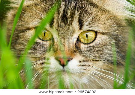 Face of cat closeup