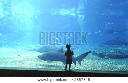 Girl Watching Sharks