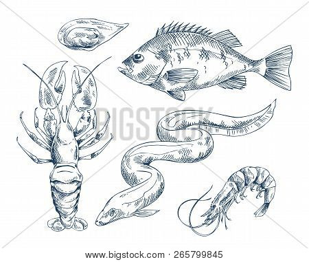 Common Perch And Eel, Small Shrimp And Crab, Edible Clam Mussel Icon Set. Monochrome Hand Drawn Sea