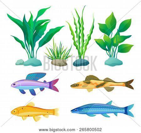 Aquarium Fish Vector Photo Free Trial Bigstock